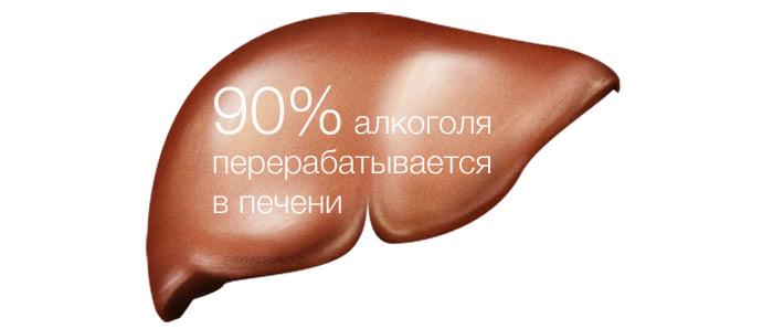90% алкоголя перерабатывается в печени