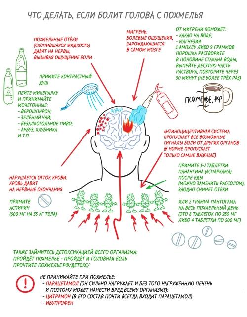 Что делать, если болит голова с похмелья. Инфографика